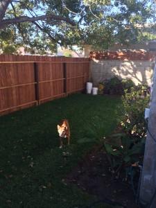 Brownie likes the new backyard.